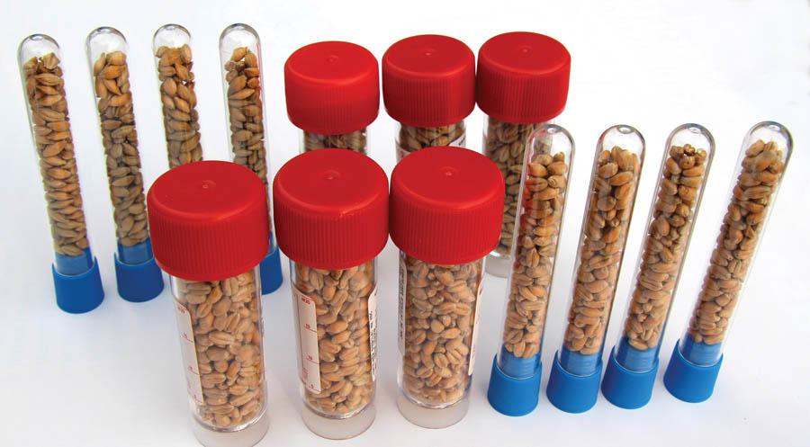 Připravené zkumavky s osivem kulturních plodin, které budou vystaveny drsným podmínkám stratosféry. Zdroj: SOSA a Hvězdárna Valašské Meziříčí, p. o.