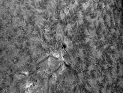 Jeden z nejvydařenějších snímků v chromosféry tohoto měsíce, aktivní oblast NOAA 12171. Ačkoli tato oblast nebyla příliš erupčně aktivní, mohli jsme v ní pozorovat stále měnící se filamenty (tmavé hadovité útvary, které jako by vylézaly z oblasti pod skvrnou). Na tomto snímku si také můžete všimnout, jak vypadají fibrily (vláknovité útvary) v aktivní oblasti, kde na ně působí silné magnetické pole a mimo tuto oblast, kde se zdají méně
